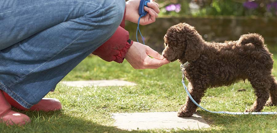 Man feeding a puppy while getting trained.